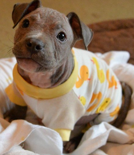 Dog needs onesie pajamas on his Christmas List