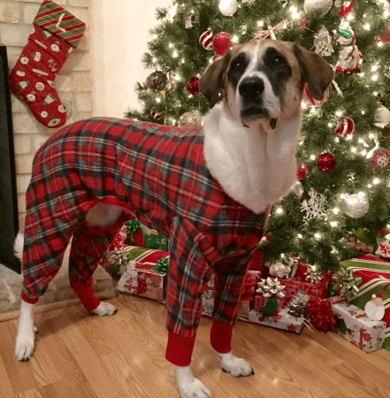 Gifts for Pets includes designer apparel