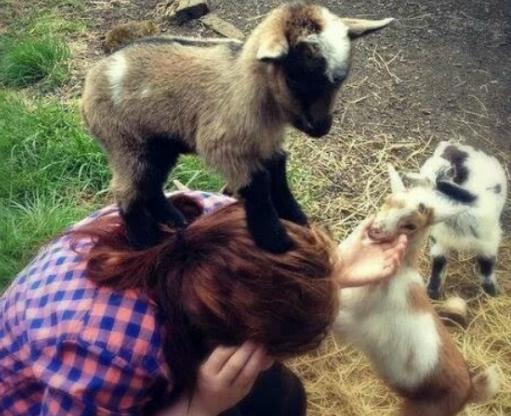 Easter Goat Cuddler